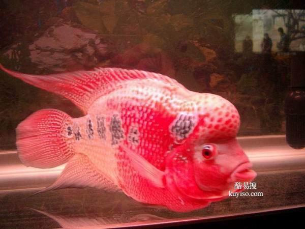 北京觀賞魚送貨上門魚缸清理魚缸養護清洗各種魚缸產品圖